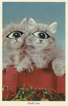 Cute Funny Animals, Collage Art, Vintage Inspired, Vintage Outfits, Bird, Studio, Cats, Inspiration, Biblical Inspiration