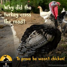 Q: Why did the turkey cross the road? A: To prove he wasn't chicken! Cute Jokes, Corny Jokes, Funny Jokes For Kids, Funny Puns, Haha Funny, Kid Jokes, Funny Stuff, Funny Quotes, Stupid Jokes