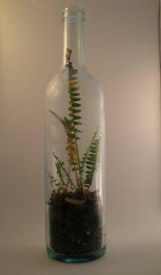 Wine bottle terrarium (combined with sconce DIY)