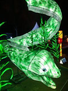 En voie d'illumination saison 2 : Océan jusqu'au 19 janvier 2020 - Katatsumuri no Yume Expositions, Plant Leaves, Pets, Animals, Orcas, Season 2, Wild Life, Animaux, Animal
