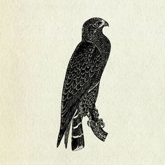 Taka (Halcón). El halcón es una ave grande, viciosa y carnívora. Existe el dicho de que 'Los halcones nunca comen de un campo de cereales. Por muy desesperados que estén, nunca se rebajarán al nivel de comer cereales'. Esto nos viene a decir que una persona noble nunca aceptará dinero o artículos sin razones justificables.