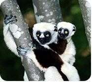 ASPCA | Endangered Species