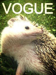 Vogue hedgehog