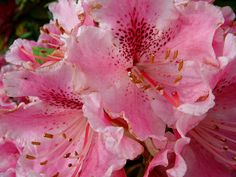 Gloriously pink