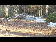 Bigfoot Sighting In Maine Goes Viral: Is Video Footage Of 'Sasquatch' The Real Deal?