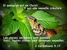 Être une nouvelle créature en Christ par le moyen de la foi, toutes choses devient nouvelle