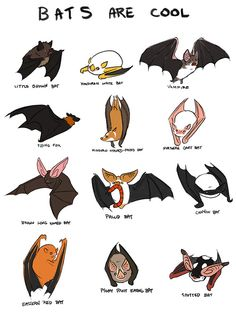 Bats are really cool and I love them. thesanityclause.tumblr.com