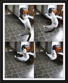 Silly Jumping Cat