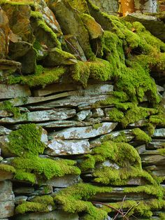 Moss won't grow on a rolling stone. But it will on a Manx stone wall in the South Barrule Plantation in St. Johns, Isle of Man.  Photo taken by James Qualtrough - flickr.