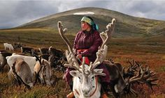 The Dukha Tribe Of Reindeer Herders In Mongolia