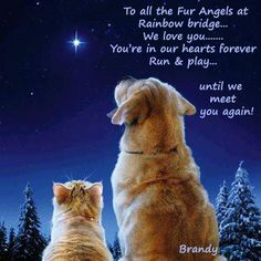 To my Buddy who I still miss every day....and to Patches....and Underdog, Cinnamon, Brewster, Jordan...until we meet again my sweet sweet babies!