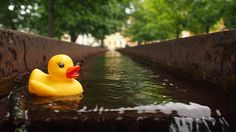 Ankat ottivat varaslähdön syyskuun ralliin! #Ankkaralli Rubber Duck, Ducks, Cute, Nice Asses, Pictures