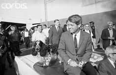 """Robert F. Kennedy Sitting Next to Dog Original caption:Senator Robert F. Kennedy pays an early morning visit to Los Angeles Central market and his attention was called to one of the signs advertising a nut shop. Reading the sign, Kennedy turned, scratched his head and commented, """"Those of us in politics belong in there."""" Kennedy brushed off all questions regarding a stone-throwing incident at Valley College late on May 15th.  Date Photographed:16 May 1968"""
