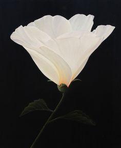 White Hibiscus by Ann Mahoney