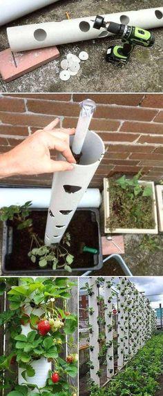 Grow sweet strawberry in a vertical PVC tube is great… #garden tips, herb #garden, fairy garden, balcony garden #legging #shirts #tshirts #ideas #popular #everything #videos #shop #tshirtideas