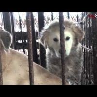 More signatures please South Korean Government: All dogs should be protected equally under the Animal Protection Law.