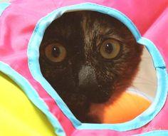 Daljja's cat :: Up & down