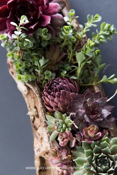 This driftwood filled with succulents is so beautiful! The post makes it look really easy to make too!
