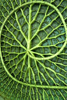 Aquatic Plant Macro | Natural Texture Pattern | Green Leaf