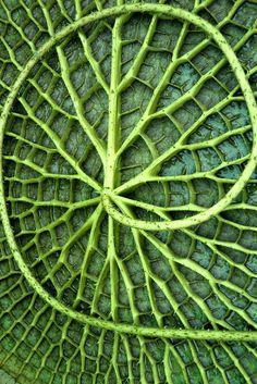 aquatic plant macro