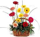 Send online flower basket to Hyderabad in any occasions. Cheapest price range from others website. Secured online payments.  Visit our site : www.flowersgiftshyderabad.com