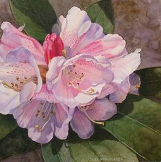 Watercolor and colored pencil, floral painting.