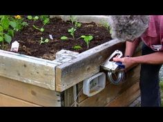 Brilliant slug control ... electric fence with a 9volt battery (raised garden beds)