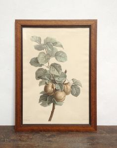 Old Engraving Framed Fruits illustration by ParisVintageGalerie