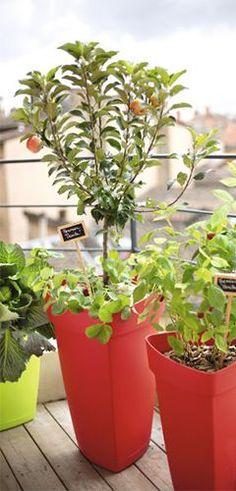 les 55 meilleures images de plantes et jardins gardening. Black Bedroom Furniture Sets. Home Design Ideas