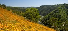 Poppy Hill on the southern flank of Mt. Murphy overlooking the narrows on the South Fork American River