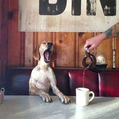 Prenez un grand café et bonne journée ! http://www.15heures.com/photos/prenez-grand-cafe-bonne-journee-4435.html #LOL