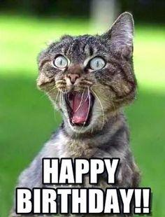 Happy Birthday Crazy Lady, Happy Birthday Sister Funny, Funny Sister, Cat Birthday Memes, Funny Birthday Cards, Birthday Humorous, Birthday Quotes, Birthday Message, Birthday Wishes