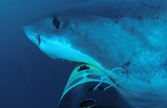 Underwater SharkCam Gets Mauled by a Great White