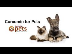 Curcumin for Pets | High-Quality Antioxidant for Dogs & Cats @carolbondy1 @shadowsdani @bar20ranch @kppromo @lorisorrells