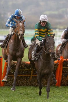 At Fishers Cross storms home at Cheltenham Festival. Types Of Horses, Sport Of Kings, Thoroughbred Horse, Racehorse, Saddles, Horse Racing, Equestrian, Riding Helmets, Pony