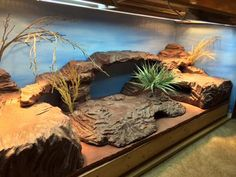 This setup is for 2 of my uromastyx, complete with four hides, two dig/lay boxes( top left(actually a styrofoam cooler)