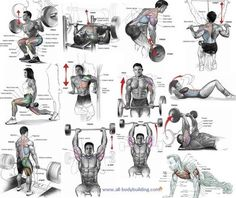 As you go about you workout routine, it is important to discover the best muscle building exercises...