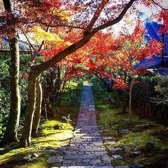 #ryoanji #temple #kyoto #japan #redleaves #japanesegarden Ryoanji, Japanese Gardens, Elements Of Design, Kyoto Japan, Tea Ceremony, Garden Paths, Temple, Zen, Places To Visit