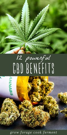 remedies natural CBD and cannabis have become very popular in recent years due to their many medicinal benefits. Learn about 12 powerful CBD benefits for your health! Calendula Benefits, Lemon Benefits, Coconut Health Benefits, Oil Benefits, Cannabis, Medical Marijuana, Autogenic Training, Tomato Nutrition, I Cord