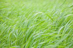 Grass by TalyaPhoto on @creativemarket