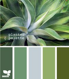 planted palette - two left and 2nd from the right