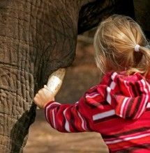 Book your elephant-back safari or elephant experience today with Elephant Sanctuary Plettenberg Bay, Garden Route - Dirty Boots North West Province, Atlanta Zoo, Popular Holiday Destinations, Elephant Ride, Elephant Sanctuary, Adventure Activities, South Africa, Safari, Elephants