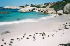 Boulders Beach, Western Cape, Cape Town, South Africa