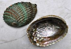Large Rainbow Ruffback Abalone 5-6 by seashellmart on Etsy