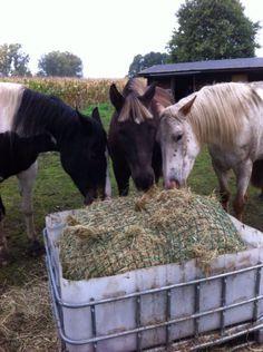 Met een slowfeeder doet je paard langer over zijn ruwvoer. Dit is erg gezond voor een paard. Bekijk hier de leukste ideeën voor jouw nieuwe slowfeeder. Horse Hay, Horse Paddock, Horse Stables, Horse Farms, Horse Slow Feeder, Hay Feeder For Horses, Mini Cows, Dream Stables, Farm Projects