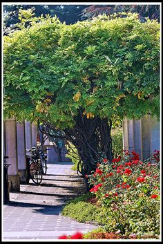 viale pedonale...Abano Terme by GIAMPIETRO ITALY...., via Flickr