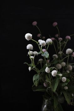 Wildflowers by Tristan B.