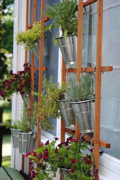 Creating an DIY Outdoor Oasis by hanging herbs from trellis or ladder