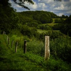 Vissenbjerg Bakkerne #beautiful #outdoor #nature #landscape #bestofscandinavia #worldunion #wu_europe #igers #igdaily #igscandinavia #danmark #nofilter #vsco #vscocam #picoftheday #photooftheday #instagood #instamood #instadaily #assens #assensnatur #visitassens #visitdenmark #instanature #instanaturelover #instabeauty #instapic #instafollow