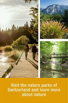 Nature Parks – learn more about Switzerland's nature Switzerland Tourism, Check Up, Pine Forest, Enjoy Summer, Travel Information, Habitats, Countryside, Parks, Castle